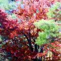 Autumn Xxxxiv by Tina Baxter