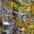 Autumnal Abstracious by Frozen in Time Fine Art Photography