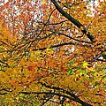 Autumnal Bliss by Cindy White