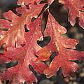 Autumnal Face by Jeannette Cruz