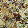 Autumnal Leaves by Chris Dawe/science Photo Library