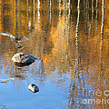 Autumnal Reflections by Mariarosa Rockefeller