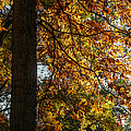 Autumnal  by Richard Reeve