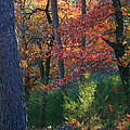 Autumnal Rock by Nina Fosdick