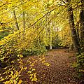 Autumnal Woodland II by Natalie Kinnear