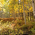 Autumns Aspen Fern by Eric Rundle