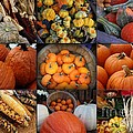 Autumn's Bounty by Dora Sofia Caputo Photographic Design and Fine Art