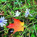 Autumns First Leaf by Jackie Carpenter
