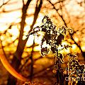 Autumn's Golden Glow by Lori Sulger