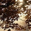 Autumns Golden Morning by Natalie LaRocque