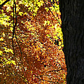 Autumn's Golds by Susan Herber
