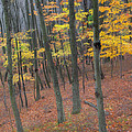 Autumn's Last Stand Landscape by Bill Wakeley