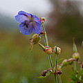 Autumns Misty Wildflowers by Miguel Winterpacht