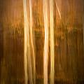 Autumn's Promise 16 by Joe Mamer