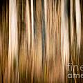 Autumn's Promise 3 by Joe Mamer