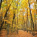 Autumn's Splendor by Claudia Kuhn