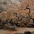 Autumn's Touch by Don Schwartz