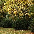 Autumn's Wondrous Colors 4 by Carol Lynch
