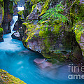 Avalanche Creek Gorge by Inge Johnsson