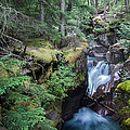 Avalanche Creek In Cedar Forest by Jack Bell