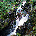 Avalanche Creek by Tracy Knauer