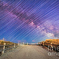 Avalon Star Trails  by Michael Ver Sprill