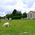 Avebury Stones And Sheep by Denise Mazzocco