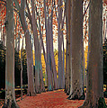 Avenue Of Plain Trees by Mountain Dreams