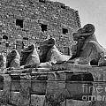 Avenue Of Sphinxes by Antony McAulay