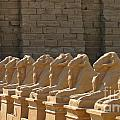 Avenue Of Sphinxes by John Malone