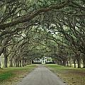 147706-avenue Of The Oaks  by Ed  Cooper Photography