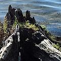 Avery Stump by Joseph Yarbrough