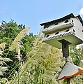 Avian Hotel by Jean Goodwin Brooks