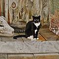 Avon Harbor Bxw Cat 9/05 by Mark Lemmon
