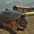 Avon Harbor Large Turtle 1 6/07 by Mark Lemmon