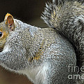 Aw Nuts by Cindy Manero