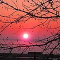Awaken The Dawn by Christine Nichols