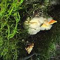 Awe Inspiring Fungi Three by Joyce Dickens