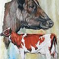 Ayrshire Cattle by Barbara Keith