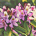 Azalea Art by Alice Gipson