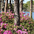 Azalea At The Lake by Cynthia Guinn
