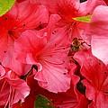 Azalea Flowers by Loreta Mickiene