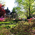 Azalea Garden by Carolyn Stagger Cokley