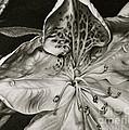 Azalea by Jennifer Slack
