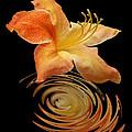 Azalea Ripples Vertical by Gill Billington