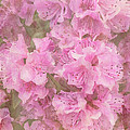 Azalea Textured by Arlene Carmel