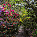 Azalea Trail by Garry Gay
