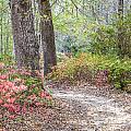 Azalea Woods by Susan Cole Kelly