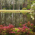 Azaleas And Reflection Pond by Kathy Clark