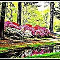 Azaleas On Creek by Kristy Cotone